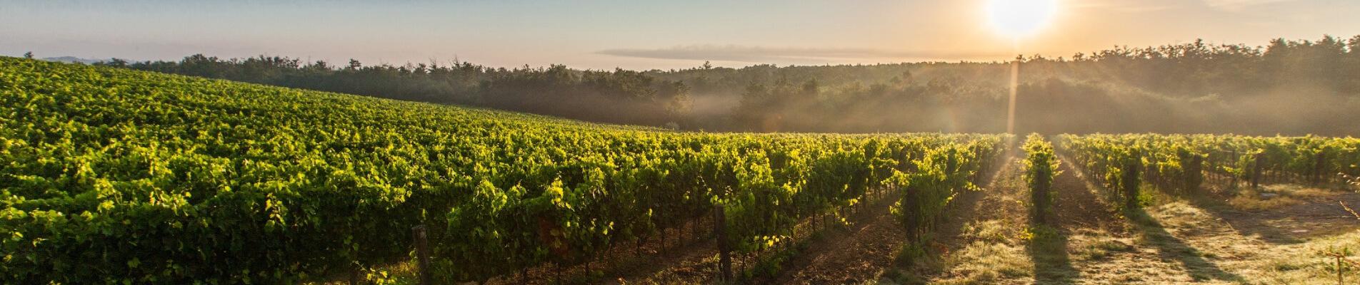 Come raggiungere sostenibilità, competitività ed efficienza nella produzione vinicola