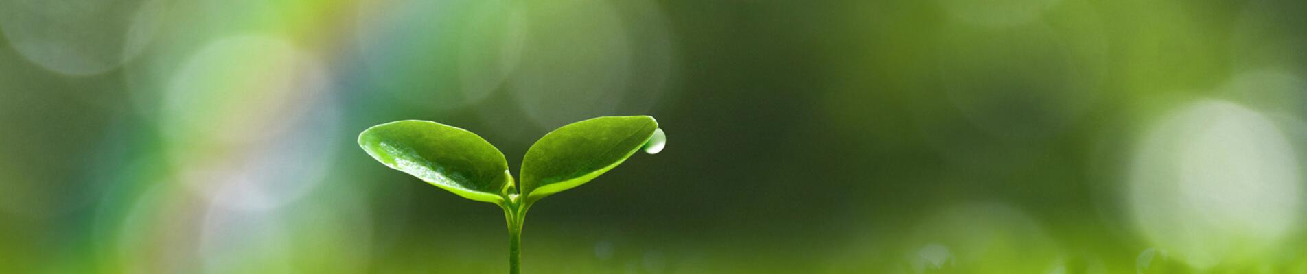 Guida ai Sistemi di Gestione Ambientale