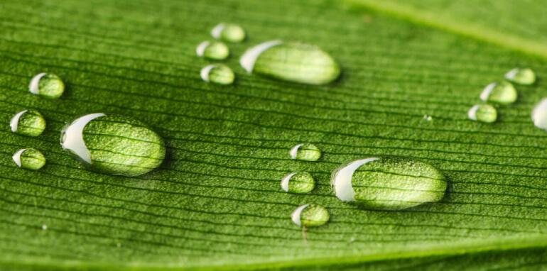 Water Footprint: cos'è l'impronta idrica di un'azienda?