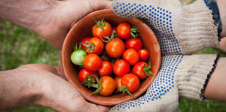 Efficienza energetica e sostenibilità ambientale nella filiera agroalimentare italiana