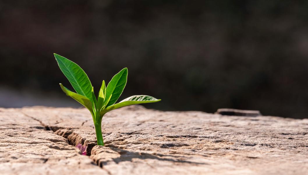 I benefici della sostenibilità aziendale